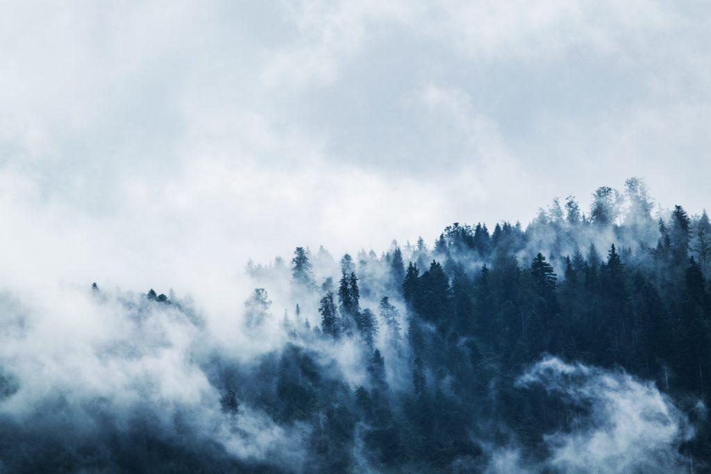 Vy över en skog med dimma som symboliserar Hållbarhet GDPR